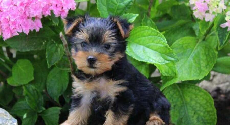 Dog Named Bounce