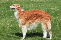 All Hound Dog Breeds