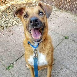 PJ/Mixed Breed/Male/Adult