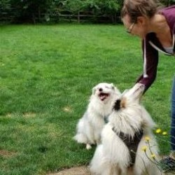 Adopt a dog:Me/Australian Shepherd/Female/Adult,Sweet Pea says,